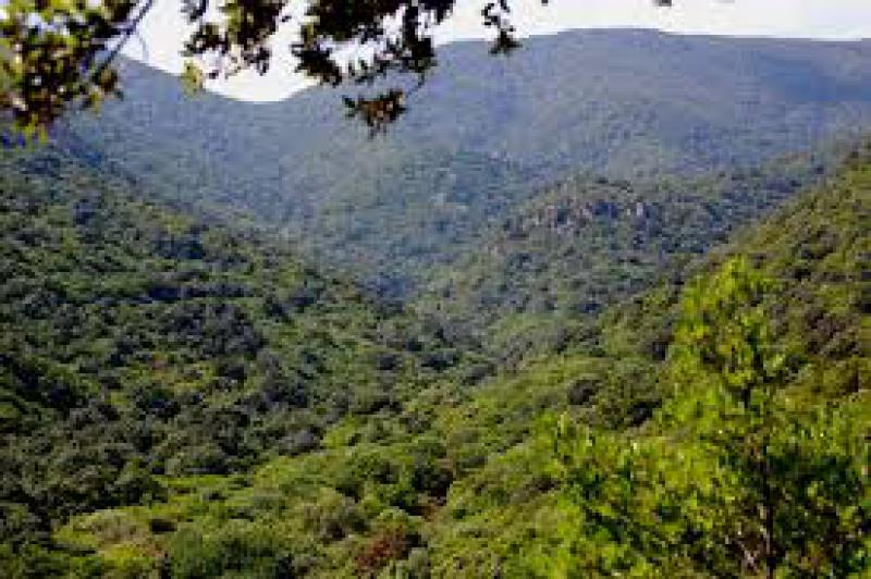 Quanti alberi sulla terra?