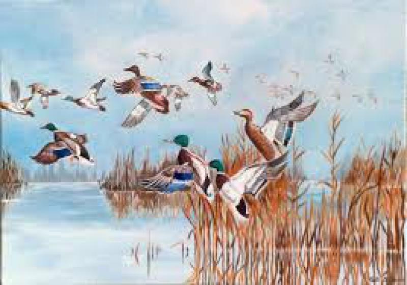 Birdwatching di primavera - Primavera uccelli primavera colorazione pagine ...